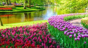 Miljontals färggranna blommor i en park